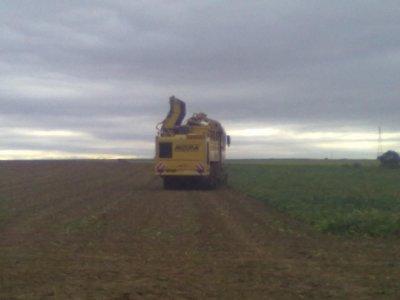 Betteraves et semis de blé 2011