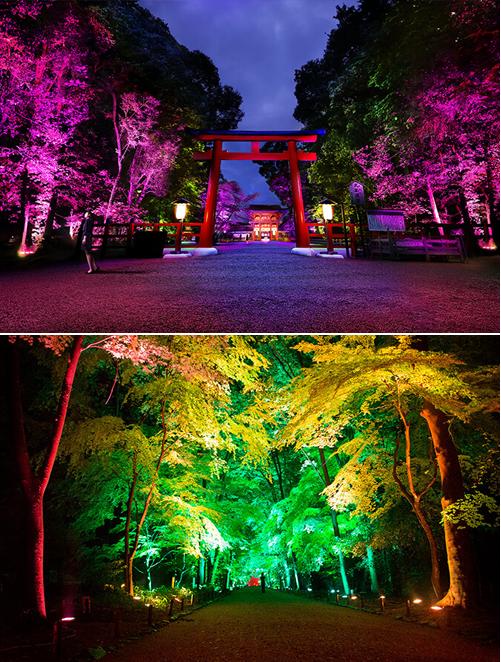 Festival des Lumières - Resonating Trees.