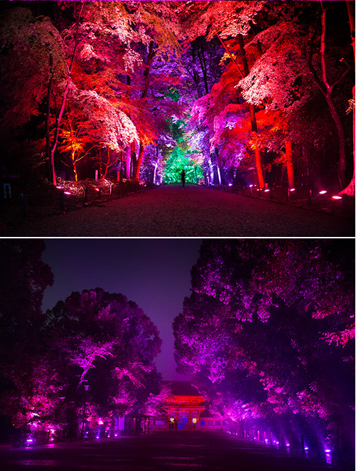 Festival des Lumières - Resonating Trees.