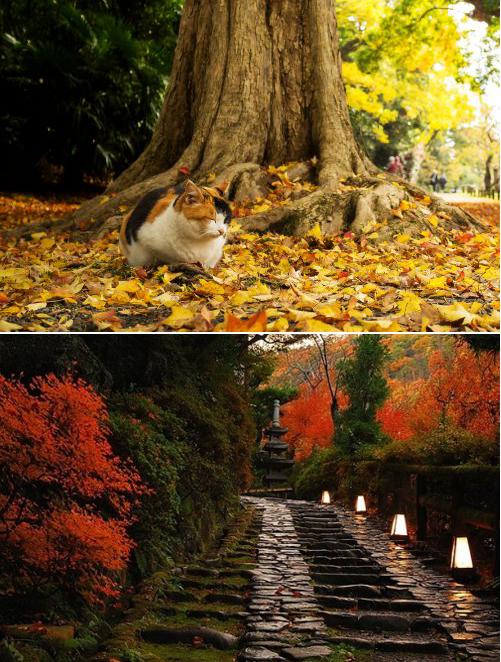 L'automne au Japon.