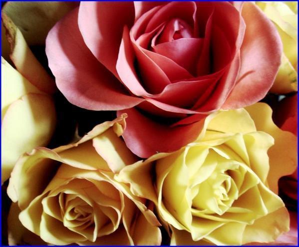 Connu des jolie fleur de la passion damour - Blog de amour-du-28 UD48