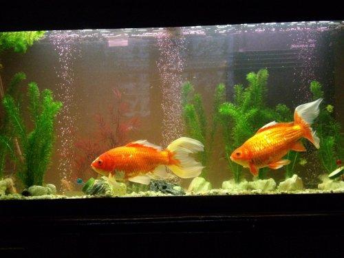 L'aquarium de Jean-Pierre