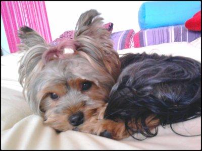 """Cerise ♥ . . . Petit chien que j'attendais depuis si longtemps !!!  11mois que tu fais mon bonheur petit bébé. Mon chien ?!    """" Je l'aime ! """""""