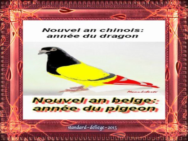 nouvelle an belge annee du pigeon