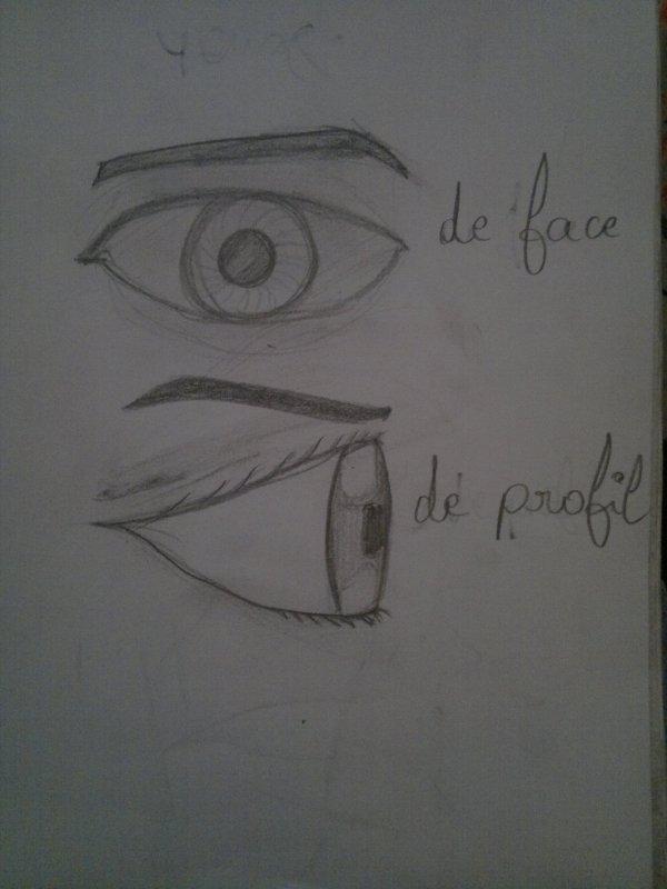 Des yeux de face et de profil.