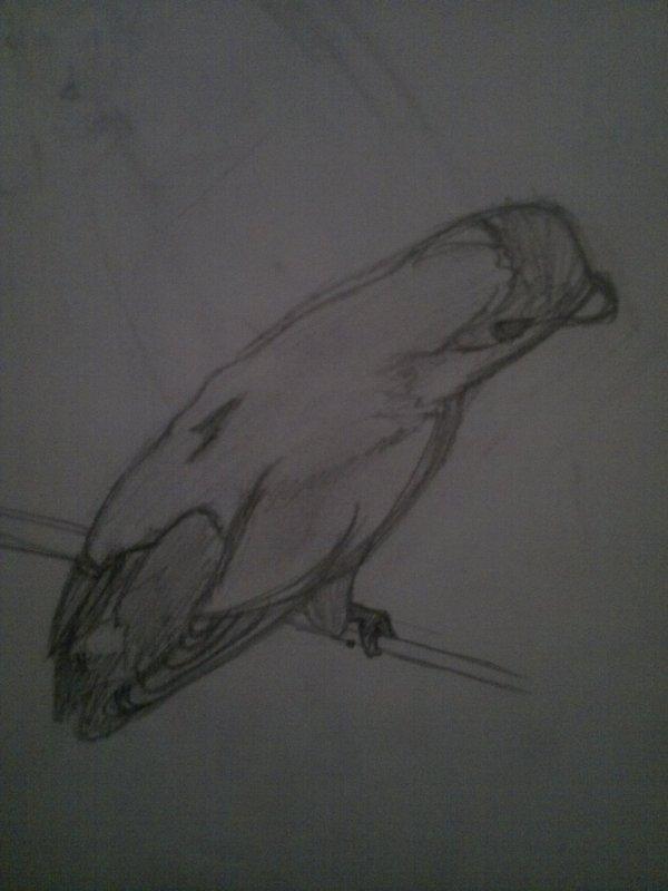 Le dessin de ma perruche trop mimi !!!!!!!! <3