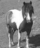 SoEquestrian