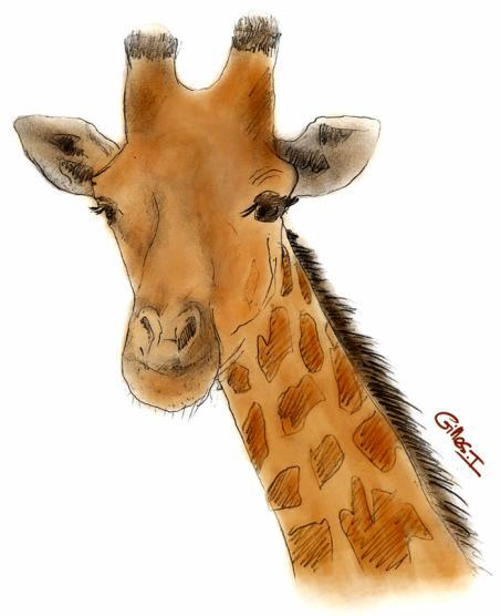 Sophie la girafe les dessins de gilou - Dessin tete de profil ...