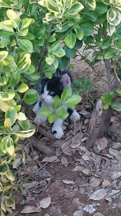 chats abandonnés
