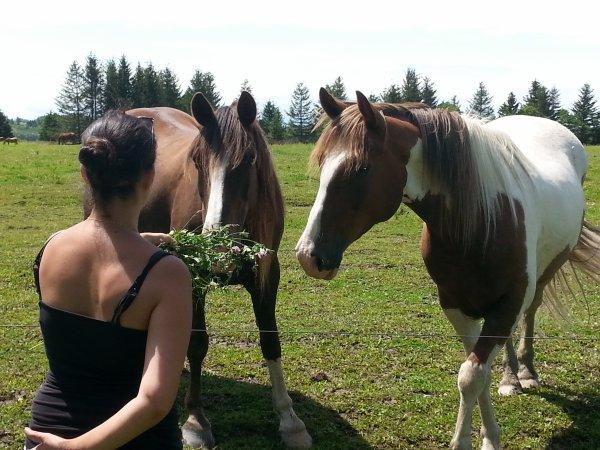 cheval affectueux hi