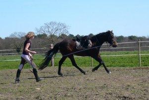 « Le cheval n'a pas demandé à faire de l'équitation. Le premier devoir du cavalier, c'est donc d'essayer de lui faire apprécier ce boulot. » Véronique de Saint Vaulry.