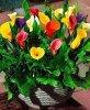 Des fleurs pour vous ....