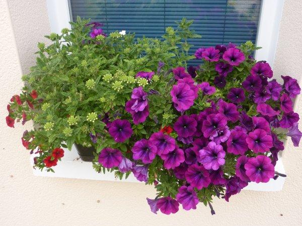 Quelques fleurs ....