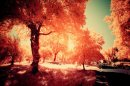 Photo de Un-mois-d-automne