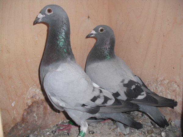 LE BULDOZER et MA DOUCE (Couple 4)
