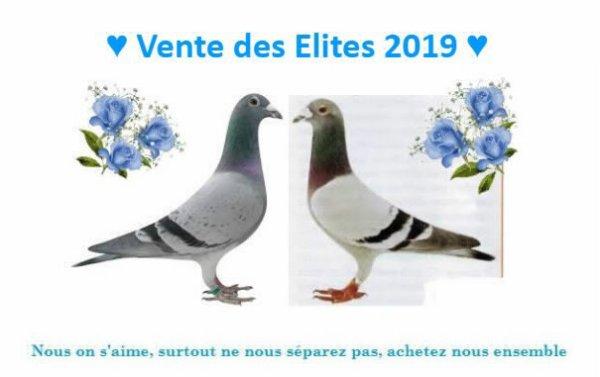 Rendez vous cet aprés midi pour la Vente des Elites 2019 à Flines les Râches, prise en mains 14h00