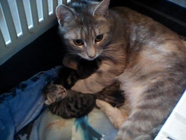 Ma louloute a eut ses bébés