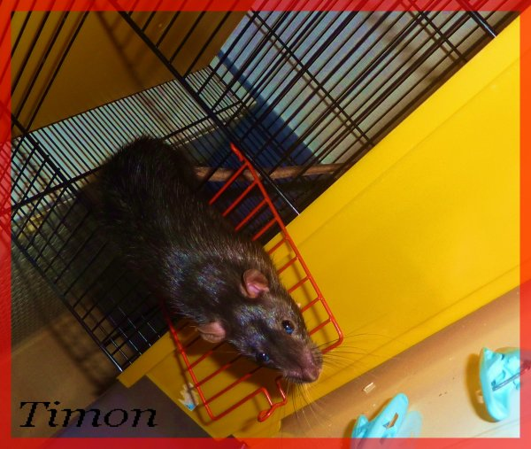 Notre petit....Ratouuuu
