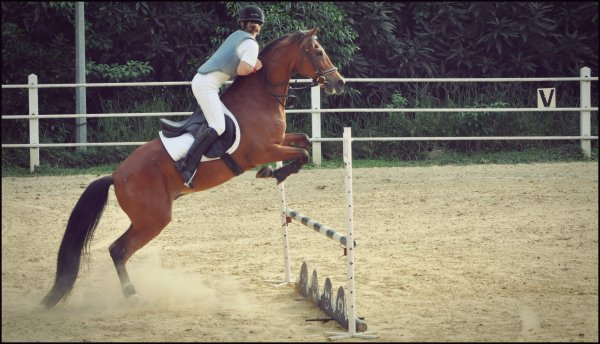 Concours d'obstacle catégorie B - Marjo' & Mustang