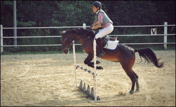 Concours d'obstacle catégorie A - Vanessa & Fripouille