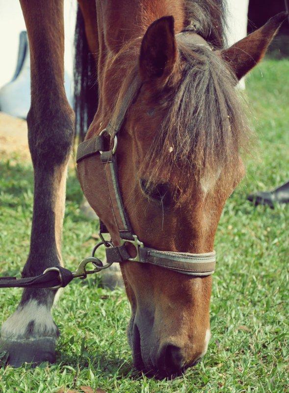 Coralie et Mustang - pansage