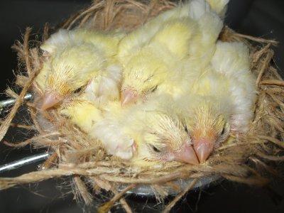 Alcune nidiate di quest'anno.