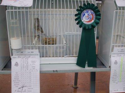 Nero Opale - 1° classificato Mostra Ornitologica Firenze