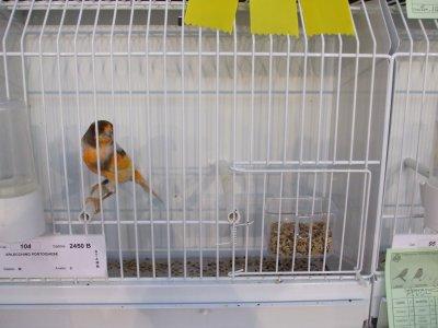 45^ Mostra Ornitologica Nazionale - Firenze