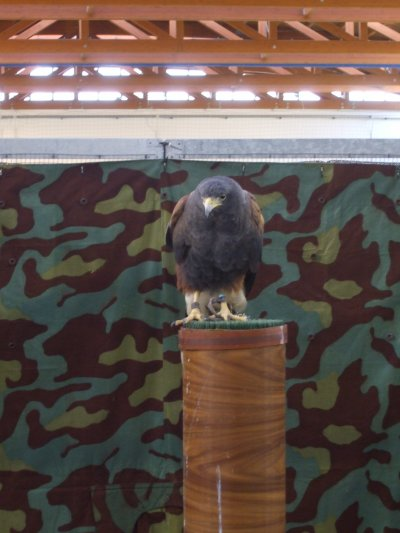 Rapaci in mostra - 45^ Mostra Ornitologica di Firenze