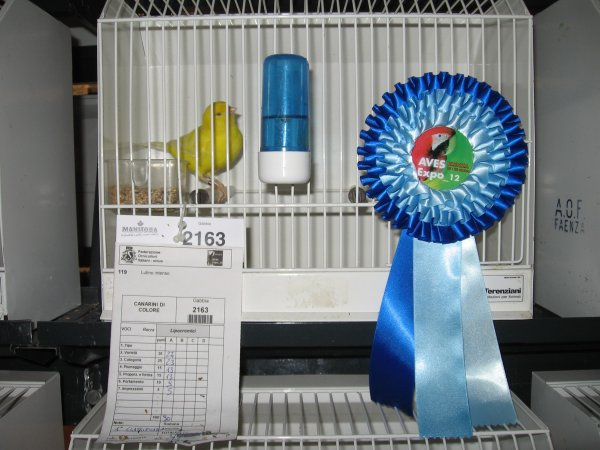 I miei primi classificati alla Mostra Ornitologica di Faenza