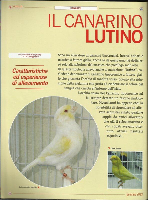"""Articolo """"Il Canarino Lutino"""" pubblicato su Italia Ornitologica di Gennaio 2013."""