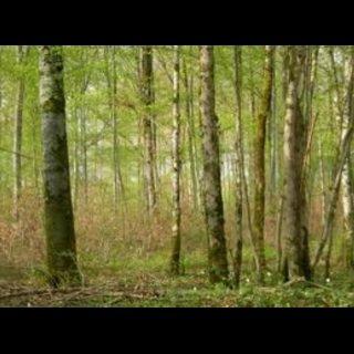 les écuries du chêne Reigner