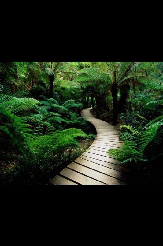 La vie est un chemin plein de virage et d obstacle