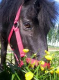 Photo de acro-o-chevaux02