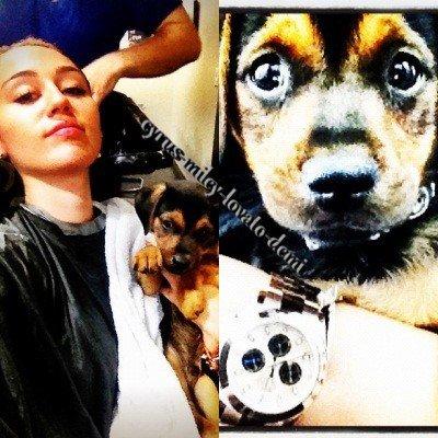 """03.05.12 : Miley présente son nouveau chiot """"Happy"""""""