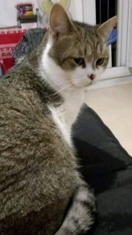 Mon chat douli quand je suis triste ou que les larmes coulent sur mes joues il est toujours la présent