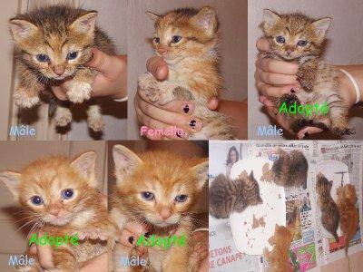 5 chatons