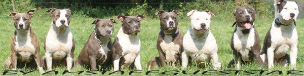 Ades et c'est deux Femelles c'est 3 fils & sa fille ) les Autres c ceux de nos potes ; )