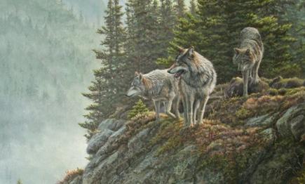 LIVRES : Percy Jackson & Le royaume des loups