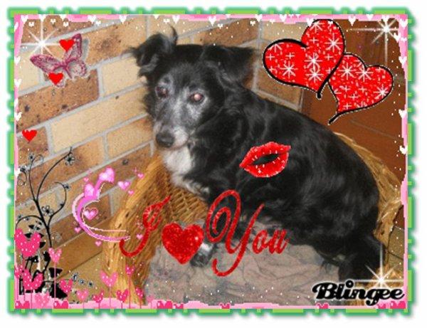 -------------------------- ♥ Mo0n chien ke j'aime for ♥ !   --------------------------