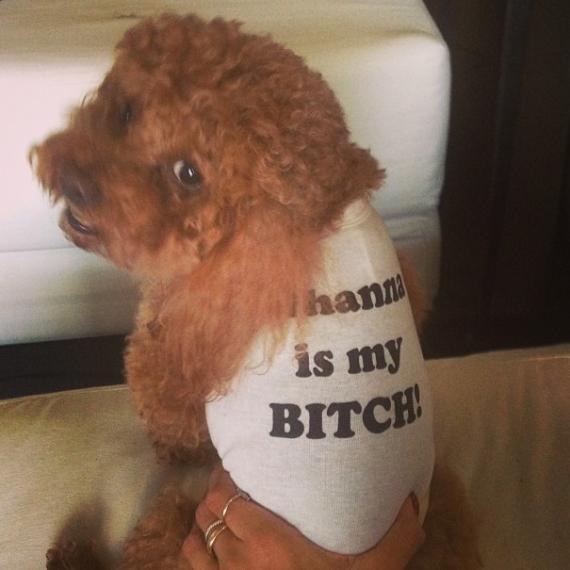 Rihanna: Son chien aussi extravagant que elle !