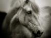 chevaux-707