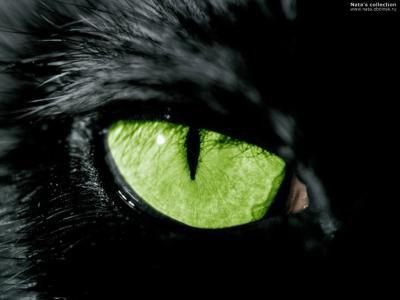 ~Chapitre 11 #Humans-Cats ~