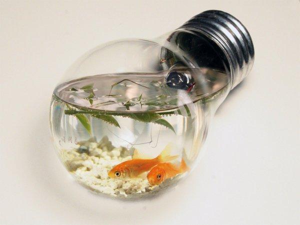 Un petit aquarium original blog de moihugoetmafamille for Petit aquarium