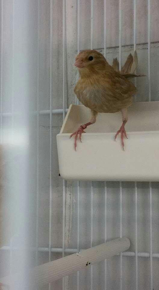 Quelques oiseaux sevré ce matin d autre photo bientôt