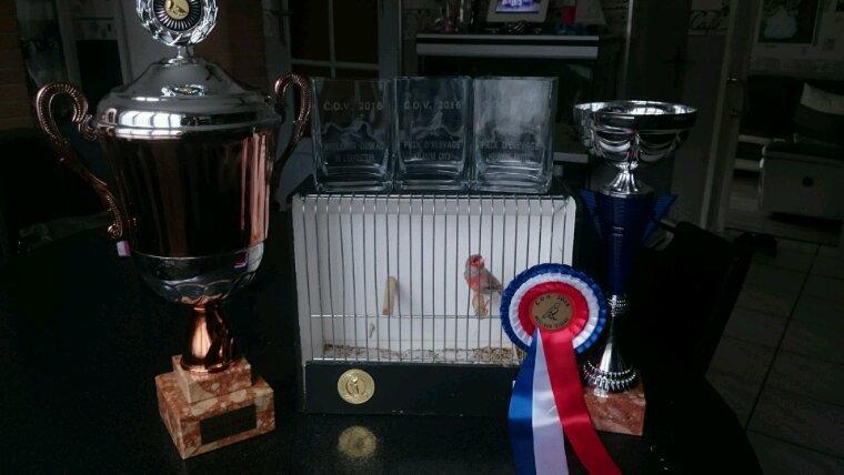 Concours Villeneuve d ascq