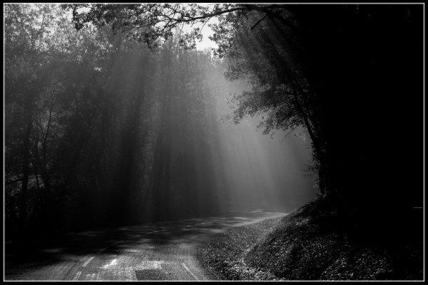 L'ombre et la lumière (Bleeding)