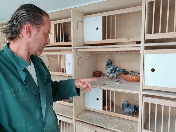 Bert Saarloos et les pigeons Peiren raconté par Piet de Vogel