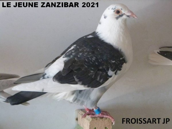 LIGNEE SENICOURT ZANZIBAR