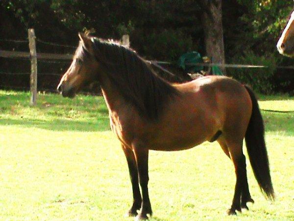 Amazing poney <3